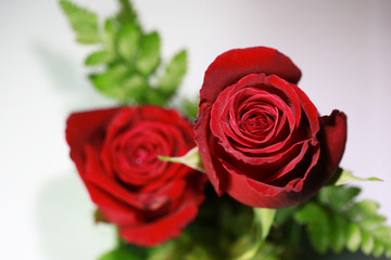 Bouquet of red roses on a white background. Top view