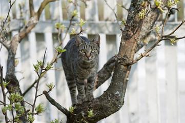 Katze auf Baum vor weißem Zaun