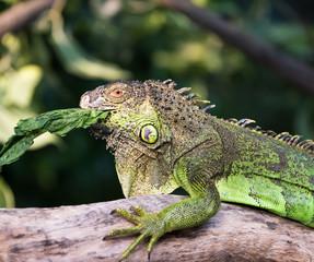 Green lizard standing on tree