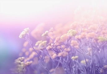Abstract floral spring summer natural template border with beautiful soft blurred lilac purple tones background sunlight. Wild campestral flowers on meadow. Dreamy gentle air artistic image.