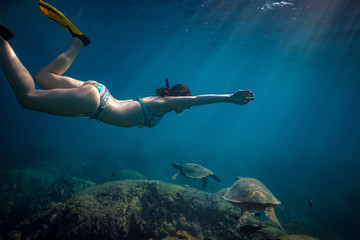 A woman swimming with sea turtles in a shallow water in Pacific ocean. Hawaiian sport activity
