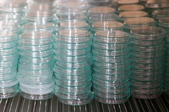 Petri dish for culture in laboratories.