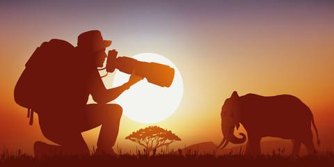 Photographe Animalier  - éléphant - Coucher de soleil