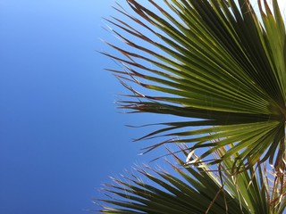 Natural green palm tree and sunny sky outdoors background. Holiday travel vacation nostalgia