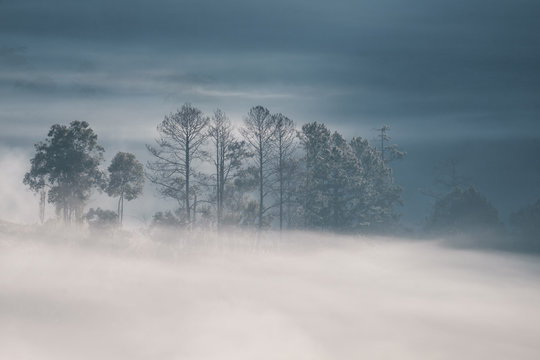 Forrest and Fog at Chiang dao,Chiangmai,Thailand