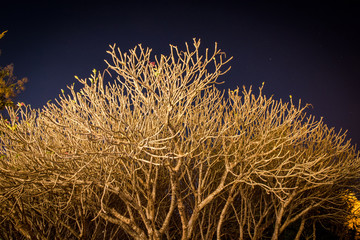 silhouette of dry tree in the night with starry sky on background