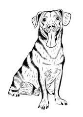 vector hand-drawn sketch portrait of a cute dog