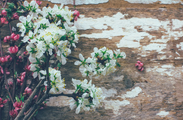 Spring background with blooming tree branches on an old rustic Board with space for text. Tinted photo
