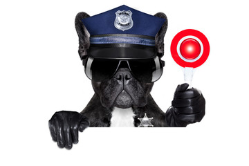 POLICE DOG ON DUTY WITH stop sign and hand , isolated on white blank background, behind black banner or placard