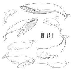 Set of different whales. Vector illustration of marine mammals, isolated on white background. Dolphin, cachalot, narwal, orca, humpback, white, bowhead, right whale. Be free. Line drawing