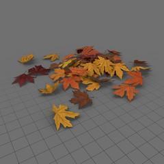 Leaves Maple 01