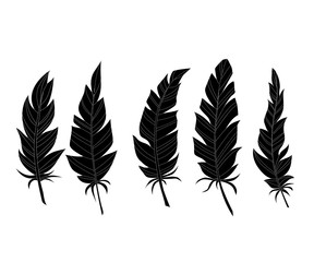 Hand drawn feathers on a white background. Silhouette.
