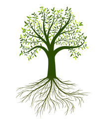 Vector tree with leaves and roots on white background