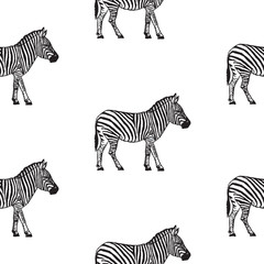Seamless pattern with hand drawn zebra vector illustration. Black and white.