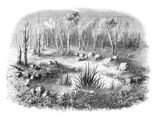 Stone circle known as the Tomb of Merlin in the forest of Paimpo