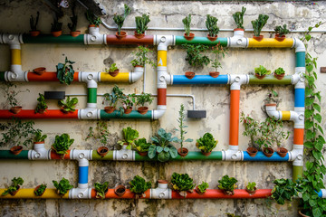 Urban Gardening - colorful pipes filled with vegetables  Fototapete
