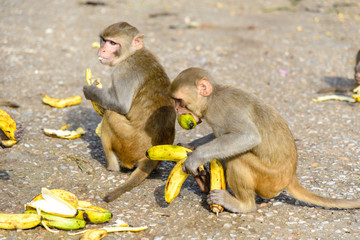 Monkeys close to Monkey Temple