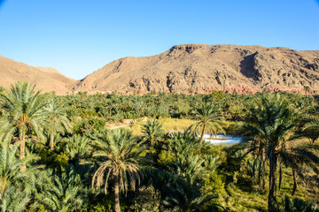 Dates Oasis in Garmeh