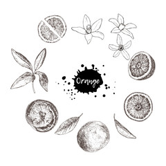 Set of isolated hand drawn oranges, slices and flowers in sketch