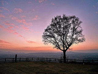 Glowing sunset light and tree silhouette with city view. Nara. Japan.