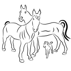 Silhouettes of horses and a calf. Family. Vector illustration