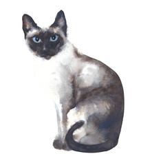 Cat watercolor painting siamese illustration isolated on white background