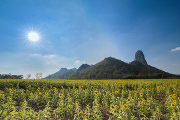 sunflower field with mountain and sun