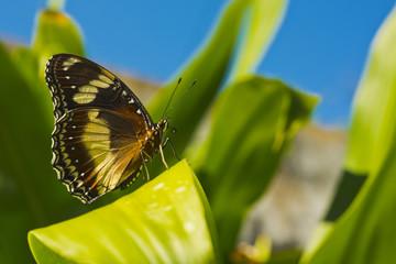 Butterfly landed on leaf