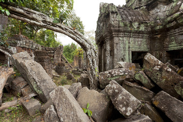 Odd shaped tree between temple in ruins in Angor Wat Siem Reap Cambodia