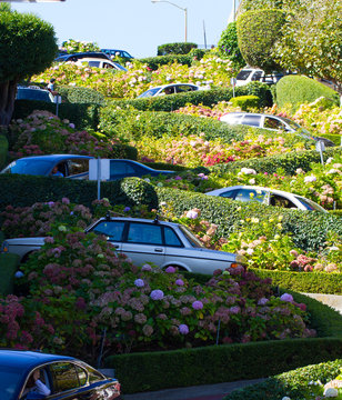 Lombard Street in San Francisco, with flowers in bloom and cars