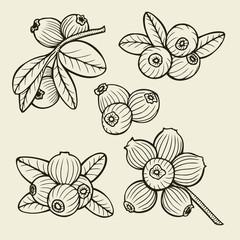 cranberry set sketches