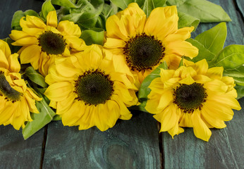 Yellow sunflowers with green leaves on dark texture