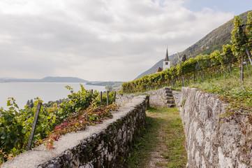 Ligerz, Dorf, Weindorf, Kirche, Weinberg, Wanderweg, Nebenweg, Bielersee, Weinbauer, Twann, Herbst, Herbstwanderung, Schweiz