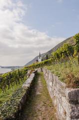 Ligerz, Dorf, Kirche, Weinberg, Wanderweg, Bielersee, Rebenlehrpfad, Rebenweg, Herbst, Herbstspaziergang, Schweiz