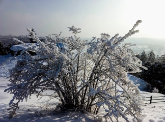 view of a Bush on top of a mountain in winter