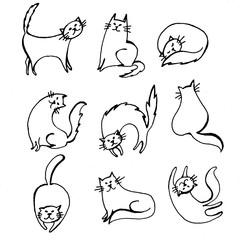 кошки, обои с кошками
