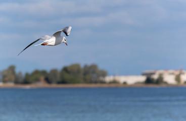 Sea bird flying