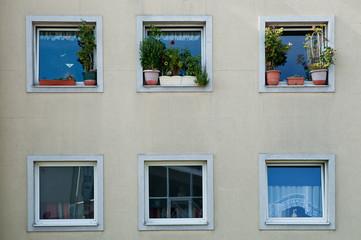 Gefährliche Blumenstöcke am Fensterbrett