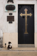 Cat at Recoleta cemetery. Buenos Aires, Argentina