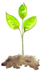Small sapling growing out of brown earth painted in watercolor on clean white background