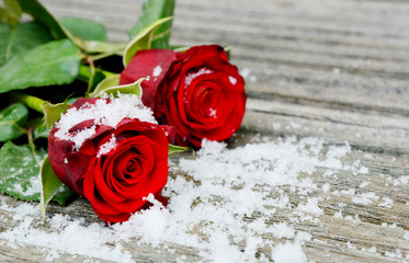 red roses and snow on wooden background for wallpaper. Red rose and snow with space for text on the wooden floor.
