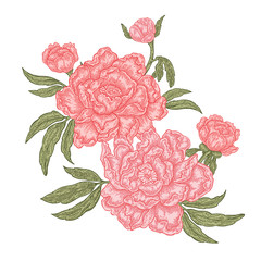 Hand drawn peony flowers isolated on white background. Vintage flowers