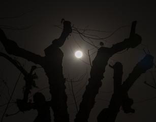 Spooky tree at night