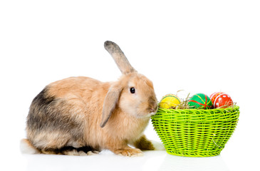 Easter bunny with basket eggs. isolated on white background