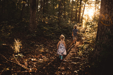 Two children walking through woodland