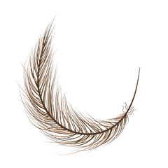 feather bird brown on a white background