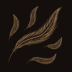 set of feathers are hand-drawn on a black background