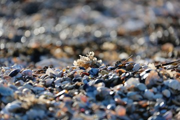 Mersea Beach