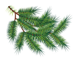 Green pine fir-tree branch, isolated on white. Vector