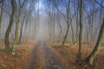 Weg im Wald im Herbst